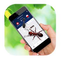Ant Run on Screen (Mobile) App