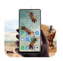 Ants in Phone Prank