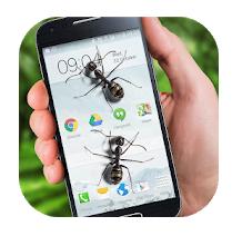Ant on screen apps-Ants on Screen Funny Joke