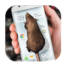 Mouse on screen apps-Mouse on Screen Scary Joke