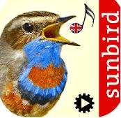 Birdsong ID